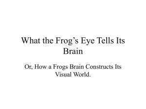 What the Frog's Eye Tells Its Brain