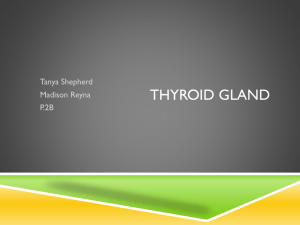 Thyroid Gland.TanyaShepherd.MaddiReyna