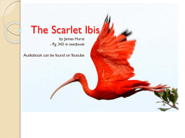 Scarlet Ibis Notes and Assignment