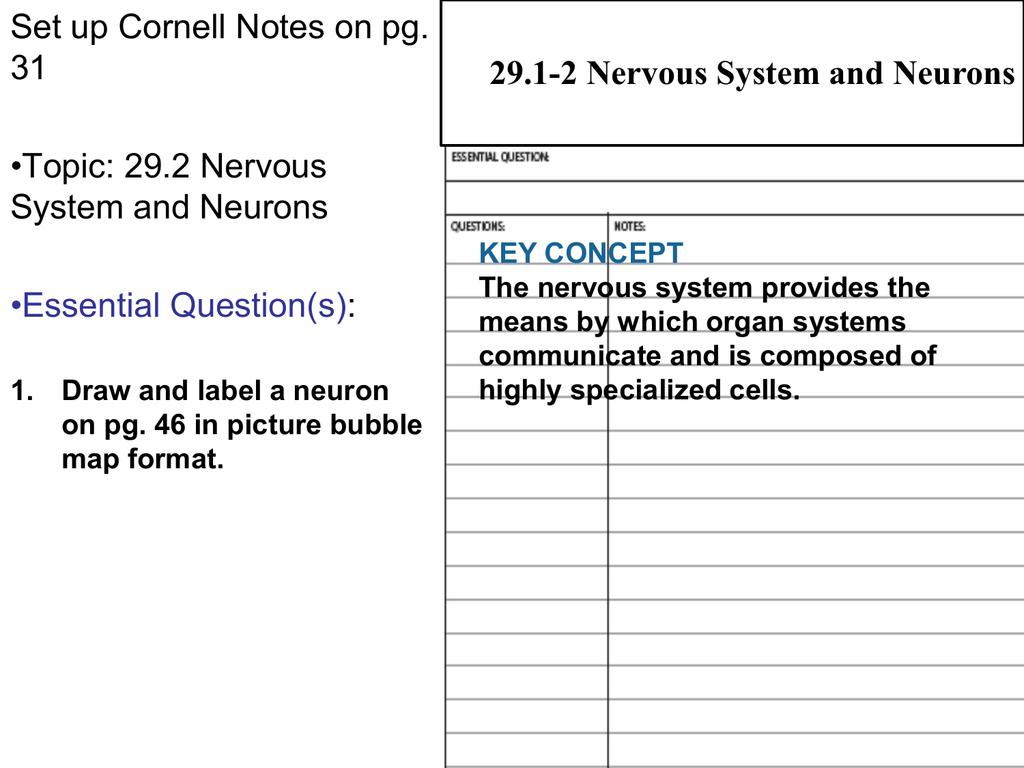 Concept Map Nervous System Answers.29 2 Neurons Cloudfront Net