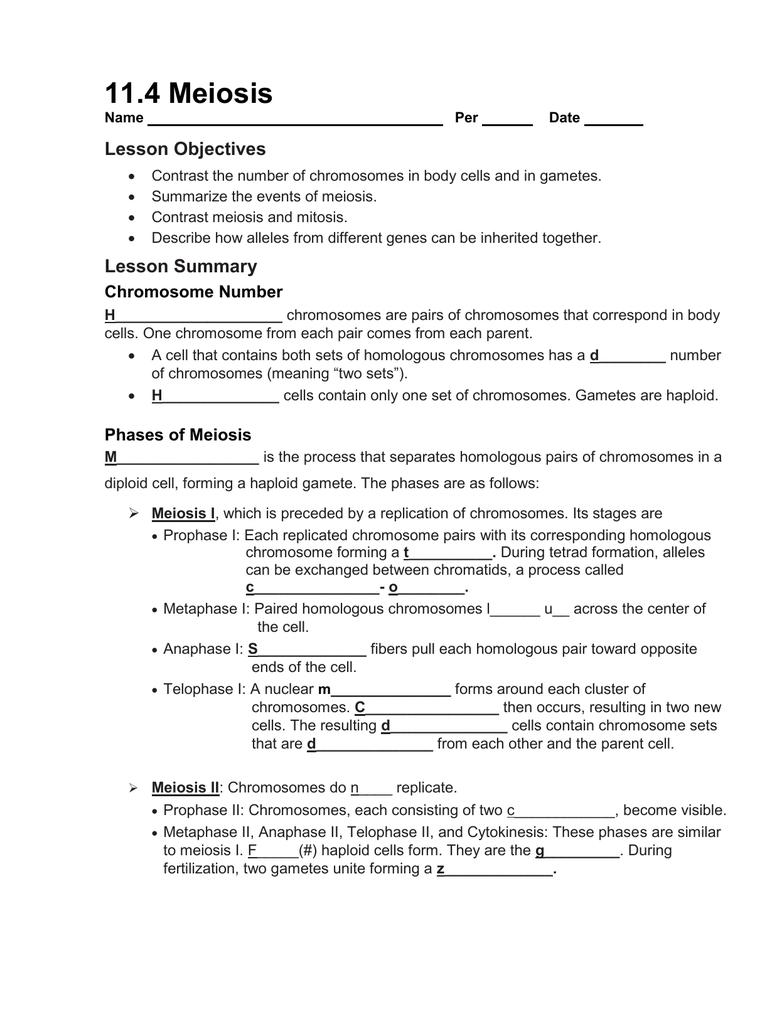 11 4 Workbook Meiosis