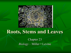 Roots, Stems and Leaves