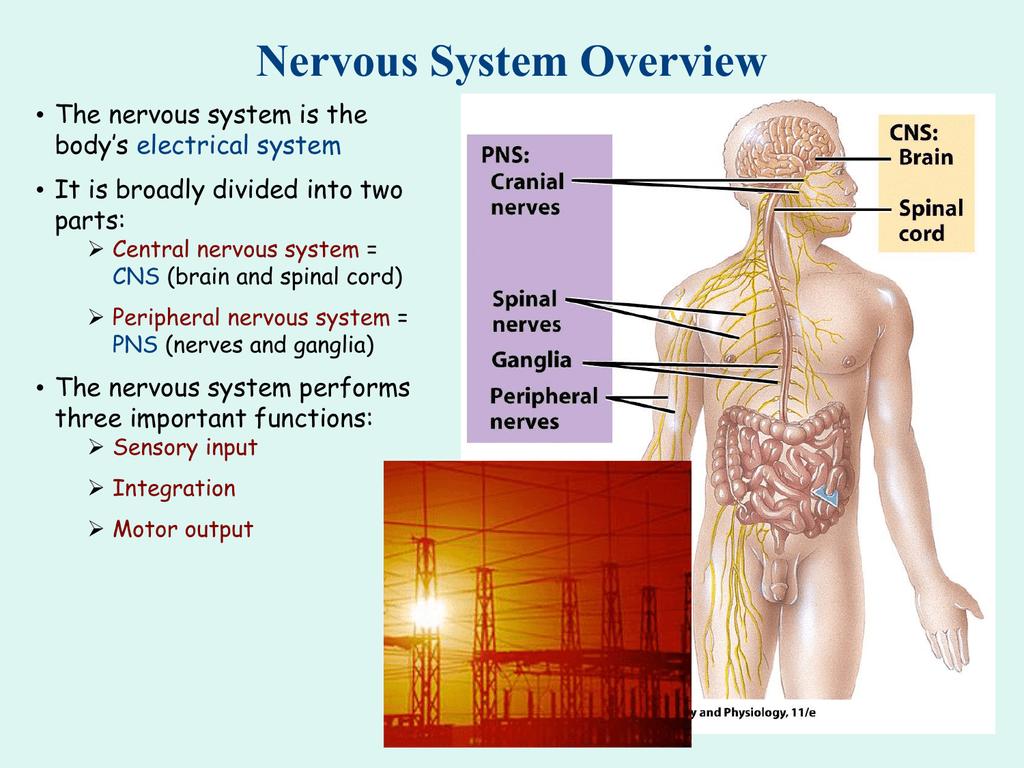Basic Neurophysiology PPT