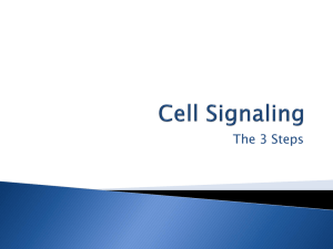 Steps of Cell Signaling
