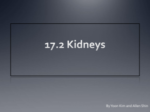 17.2 Kidneys - YISS-Anatomy2010-11
