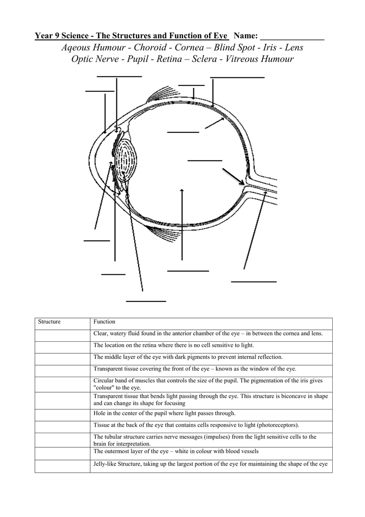 Eye structures and functions ccuart Choice Image
