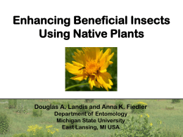 Enhancing Beneficial Insects Using Native Plants