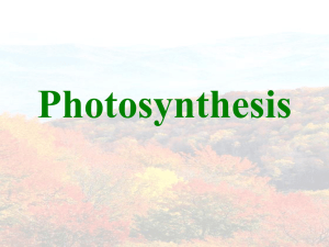 SBI-4U photosynthesis introduction
