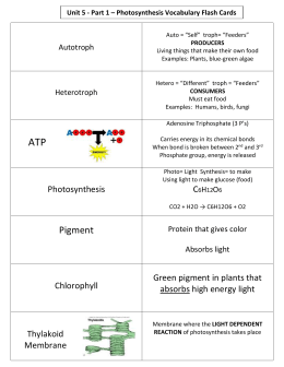 Unit 5 - Part 1 – Photosynthesis Vocabulary Flash Cards