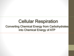ap biology essay cellular respiration photosynthesis
