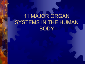 11 Body Systems