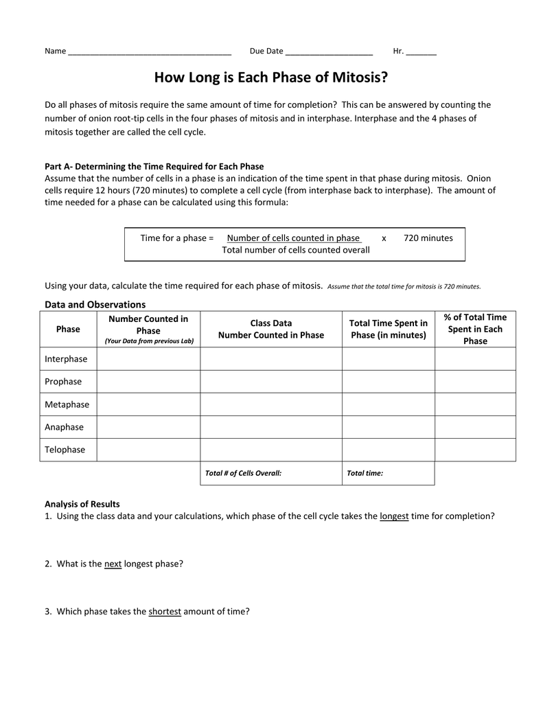 Uncategorized Virtual Lab The Cell Cycle And Cancer Worksheet mitosiscancer lab day 2