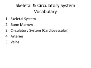 Skeletal & Circulatory System Vocabulary