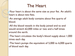 The Heart - ccbbiology