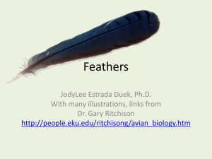 Feathers I: structure