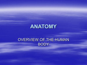 anatomy overview