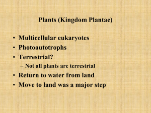 Plants (Kingdom Plantae)
