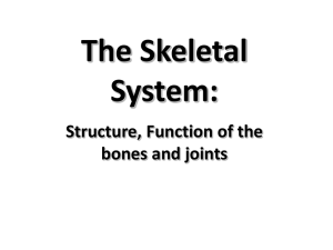 Skeletal - Cloudfront.net