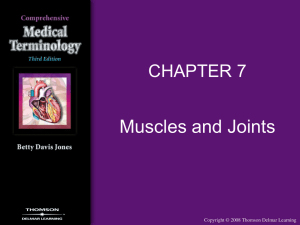 Chapter 7 Muscles and Joints
