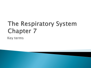 The Respiratory System Chapter 7
