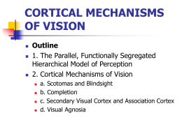 CORTICAL MECHANISMS OF VISION