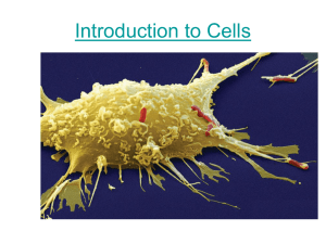 Introduction to Cells - Winston Knoll Collegiate