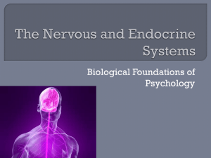 Unit 2 – The Nervous and Endocrine Systems