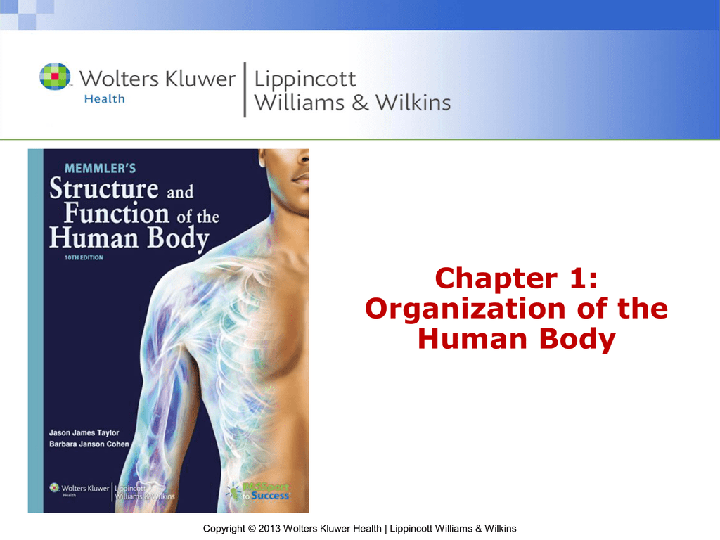 Chapter 1: Organization of the Human Body