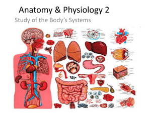 Anatomy & Physiology 2 - Balance Massage Therapy