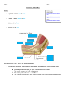 Ligament and tendon notes