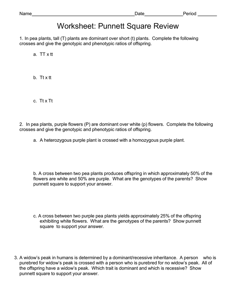 Punnett Square Problems Worksheet – Punnett Square Worksheet