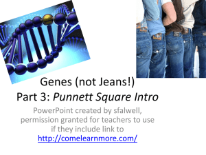 Genes (not Jeans!) Part 3: Punnett Square Intro