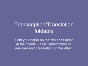 Transcription/Translation foldable