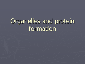 Organelles and Cellular Function