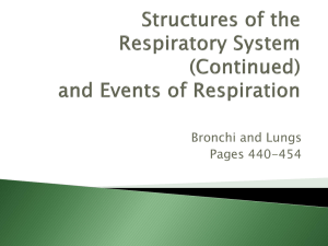 Ch 13 Respiratory Structures and Events of Respiration