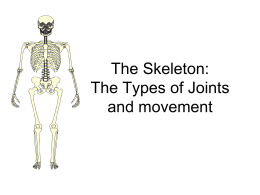 Printables Joints And Movement Worksheet joints movement worksheet joint badgerbodies