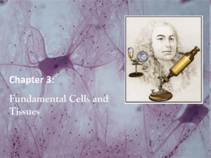 Fundamental Cells and Tissues