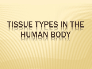 Tissue Types in the human body