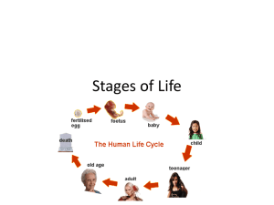 Stages of life power point