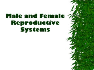 Male & Female Reproductive System