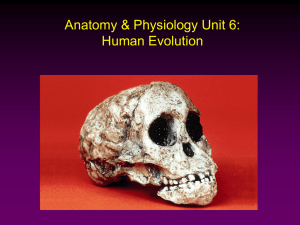 Anatomy & Physiology Unit 6: Human Evolution
