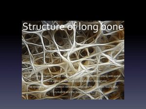 Structure of long bone - Sport, Exercise and Health Science