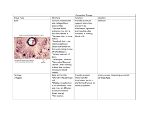 Connective Tissue Chart