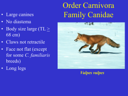 Canis latrans - Natural Resource Ecology and Management