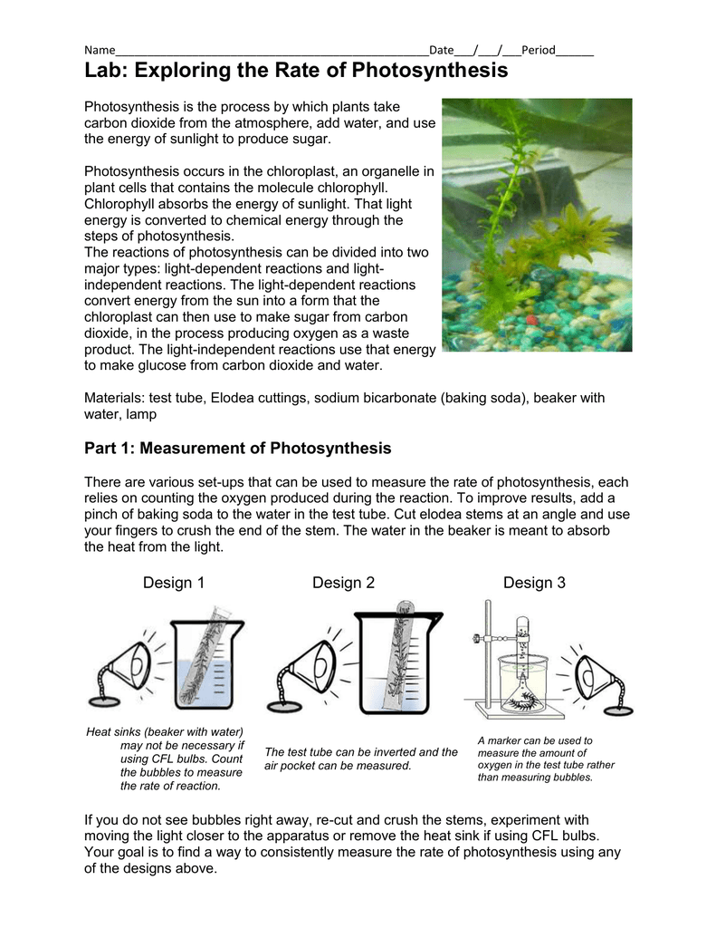 the photosynthetic process removes ___ from the environment