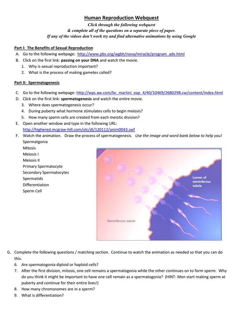 Worksheet Eftps Worksheet Short Form Worksheet Fun Worksheet Study