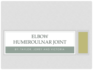 Elbow Humeroulnar Joint