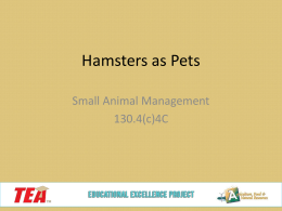 Hamsters - Educational Excellence
