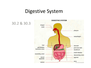 Digestive, Respiratory and Circulatory Systems