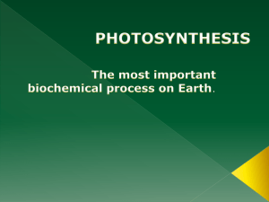 photosynthesis - Archmere Academy